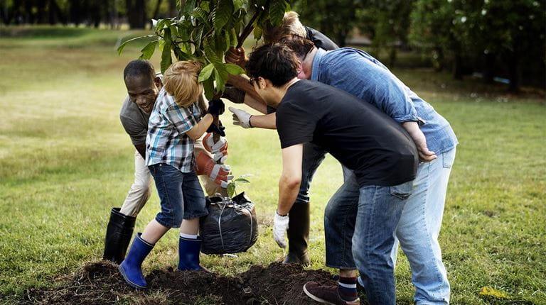 Plantation d'un arbre ensemble